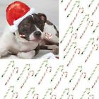 "8"" Ranch Rewards Rawhide Candy Cane Dog Treats Pet Christmas Present For Dogs"