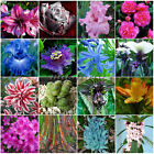 Mixed Color Seeds Bulbs Home Garden Flower Plant Home Garden Potted Yard Decor