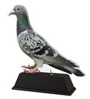 PIGEON RACING TROPHY CUT TO SHAPE ACRYLIC *FREE ENGRAVING* 100mm - 4 SIZES!