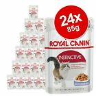 Royal Canin Adult Jelly & Gravy Mixed Pack 24 x 85g Cat Pet Wet Food