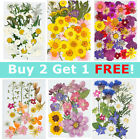 Real Dried Press Flowers Candle Making Craft Diy For Resin Jewelry Making Decors