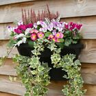 T&m Plastic Wall Flower Pot Planter Home Decor Grow Garden Hanging Fence Basket
