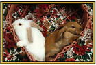 Rabbit / Hare  Photographs  - New - Fridge magnets