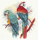 Ceramic Decals Colorful Parrot Pair on Branch  Blue/Red image