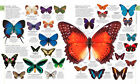 5433.Multi-colored butterflies.assorted breeds.POSTER.decor Home Office art