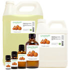 Pumpkin Patch Fragrance Oil (Free Shipping)