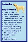 Labrador (Yellow) - New - Dog fridge magnets New Gift - Free UK p/p
