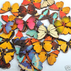 Bulk Butterfly Phantom Wooden Sewing Buttons Scrapbooking UK