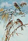 Tree Sparrows   Birds    Counted Cross Stitch Pattern