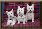 Cute dogs and puppies Photographs - Fridge magnets - .
