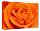 - Orange Rose Flower Wall Picture Hanging Rose Canvas Print Picture A1/A2/A3/A4