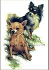 A Pair of Chihuahuas ~ Dogs ~ Cross Stitch Pattern