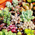 Rare Flower Seeds Ideal Garden Potted Seed Home Yard Bonsai Plant Decor Various