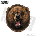 Bear Decal Grizzly Hunter Kodiak Hunting Alaska Window Gloss Sticker HVG