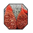 Peanuts in Nets 250g 500g Wild garden bird seed feeder