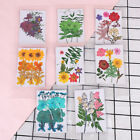Pressed flower bag mixed organic natural dried flowers diy art floral decors ES
