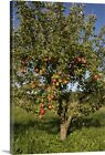 Apple tree in field Canvas Wall Art Print,  Home Decor