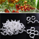 US 100pc Tomato Veggie Garden Plant Support Clips for Trellis Twine Greenhouse A
