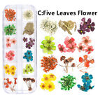 FixedPrice12 color real dry dried flower leaves 3d uv gel acrylic diy tips nail art decor