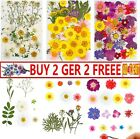 35-42pcs Real Dried Flowers Pressed Leaves For Epoxy Resin Jewelry Making Diy A4