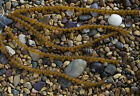 1 Strand of 6mm Round Frosted Matte Beach Sea Glass Beads You Pick The Color!