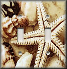 Light Switch Plate Cover - Beach Home Decor - Starfish And Beach Shells Sand