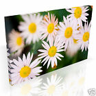 Pretty Daisy Daisies in Meadow * Top Quality Box Canvas Ready to Hang * A1 A2 A3