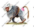 AFRICAN WILD BABOON JUNGLE ZOO MONKEY VINYL DECAL COMPUTER TABLET STICKER GIFT