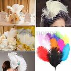 5pcs Real Large Ostrich Feathers For Wedding Decorations 5.9~7.8 inch Length