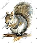 Squirrel Auto Boat RV Camper Truck Car Window Body Glass Vinyl Decal Sticker Art