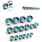2pc/16pc Night Sky Forest Path Ear Tunnels Flesh Plugs Steel Expanders Stretcher