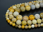 Natural Indonesia Fossil Coral Jasper Gemstone Round Beads 15.5'' 6mm 8mm 10mm