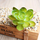 Mini Plastic Miniature Succulents Green Plants Garden Home Office Decor Beauty