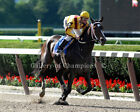 "Rachel Alexandra 2009 Mother Goose Photo 8"" x 10 - 24"" x 30"""