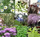 Wide Selection of Heirloom Herbs Seeds -You Can Choose The Variety