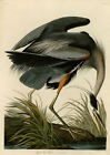 John James Audubon: Birds of America, Great Blue Heron. Fine Art Print/Poster
