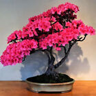 1-20000pcs Rare Fruit Vegetable Flower Seeds Bonsai Tree Plant Home Garden NEW