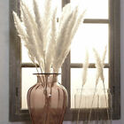 15x Natural Dried Pampas Grass Reed Home Wedding Flower Plant Bunch Diy Decor
