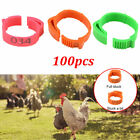 Chicken Hen Pigeon Leg Poultry Dove Bird Chicks Duck Parrot Clip Band Rings New