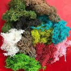 45g Dried Sphagnum Fresh Mosses Preserved Flowers Real Eternal Grass Decorative