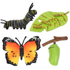 4pcs Durable Practical Butterflies Model Insect Figurines Life Cycle Ornaments