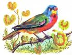 Colorful Bird Reproduction Quilt Block Multi Sizes FrEE ShiPPinG WoRld WiDe (K3