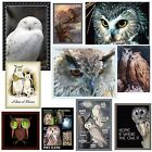 Owl Magnet Snowy Barn Hoot Eagle Dore Brooks Screach Choose Favorite Owl Picture