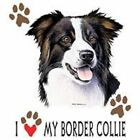 Border Collie Love Hood Sweatshirt & Sweatpants Pick Your Size
