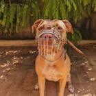 New Strong Metal Wire Basket Dog Muzzle Amstaff  Pitbull, Bull Terrier *REDUCED*