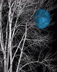 Tree Moon Bedroom Blue Gray Wall Art Decor Matted Picture
