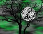 Green Gray Wall Art/Tree Moon/Bedroom Home Decor Matted Picture