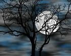 Blue Gray Tree Moon Bedroom Matted Wall Art Picture