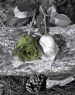 Black White Green Floral Bathroom/Bedroom Wall Art Matted Picture