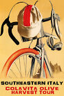 BICYCLE COLAVITA OLIVE HARVEST TOUR ITALY CYCLING BIKE RIDE VINTAGE POSTER REPRO